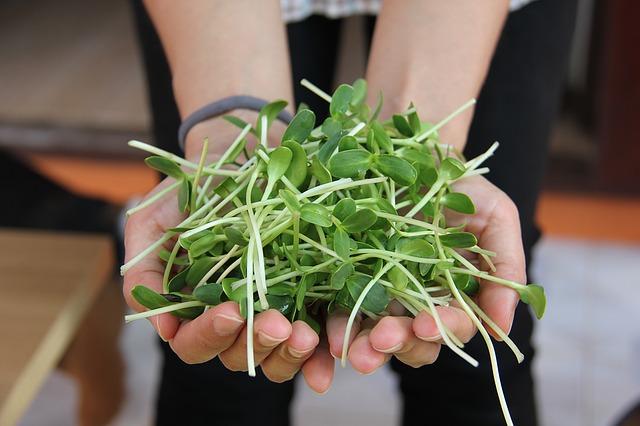 zdravé bylinky